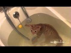I can swim! (Плавучий Кот)