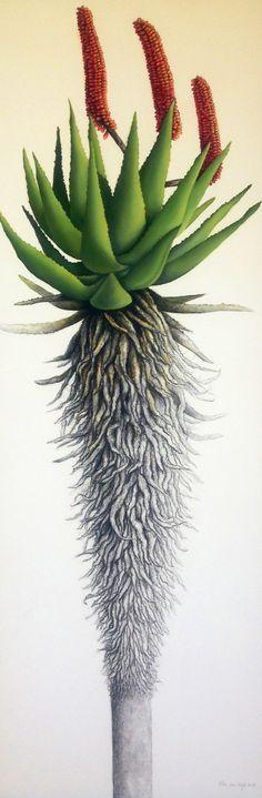 Aloe 2013 Tree Illustration, Botanical Illustration, Botanical Drawings, Botanical Prints, Aloe Vera Tree, Scientific Drawing, South African Art, Desert Art, Farm Art