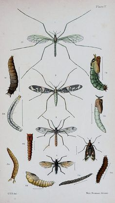 An elementary manual of New Zealand entomology : being an instroduction to the study of our native insects ; with 21 coloured plates / by G.V. Hudson. on Flickr.  Via Flickr: Publication info London :West, Newman, & Co., 54, Hatton Garden,1892. Contributing Library:NCSU Libraries  BioDivLibrary