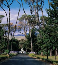 Avenue of Stone Pines leading to the Boschendal Wine Estate Manor House, - located between Paarl & Franschoek -Western Cape Province, South Africa. Image Internet, South Afrika, South African Wine, Namibia, Le Cap, Wale, Westerns, Places Of Interest, Africa Travel