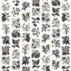 Buy Rebel Walls Fruit & Flora Colour from the extensive range of Rebel Walls at Select Wallpaper. Rebel, Poster Xxl, Flower Beds, Decoration, Flora, Fruit, Walls, Wallpaper, Plants