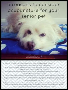 5 reasons to consider acupuncture for senior pets. Acupuncture now available at Iowa Veterinary Specialties!