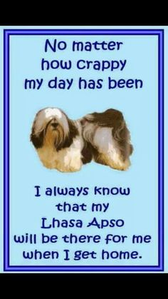 If you feel alone! Get a dog. You will never feel alone again Lhasa Apso, Doggy Stuff, Puppies, Babies, Pets, Graham, Real Life, Chloe, Angel