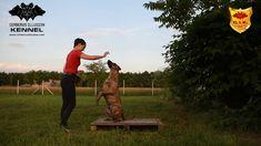 Cimarron Uruguayo - Beulah Cerberus Illusion - trick dog -2-on/2-off Pu...