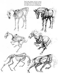 "amarilloo: "" blackbackedjackal: "" If you love animals or drawing then you should add this book to your collection. The Art of Animal Drawing is a crash course in not only animal anatomy, but usage of. Horse Drawings, Animal Drawings, Art Drawings, Drawing Animals, Horse Anatomy, Animal Anatomy, Horse Sketch, Anatomy Drawing, Anatomy Sketches"