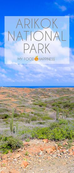 Here are the top 8 things to do in Aruba as a couple for the ultimate relaxing and adventurous holiday on this paradise island. Aruba Activities, All I Ever Wanted, I Want To Travel, South America Travel, Paradise Island, Tropical Paradise, Travel Around The World, Where To Go, Cool Places To Visit