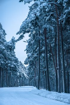 Winter forest. Tampere, Finland