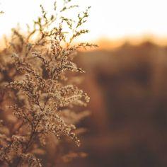 Durante el invierno en mi pueblo el sol se marcha pronto, pero aún así salir a pasear durante la tarde es agradable. Hace frío, mucho frío, pero me encanta. ¿Vosotrxs sois más de frío o de calor? #naturaleza #escapadas #break #entretrabajoytrabajosalgoapasear #lagarrotxa #meditationtime #nature #greenlife #eco #ouiclementine