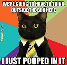 Cat memes I just pooped in it...