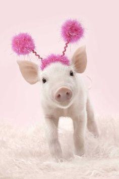 Party pig - ha!