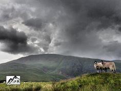 Lake District Photo (@L_D_PHOTO) on Twitter