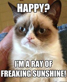 happy im a ray of freaking sunshine - Grumpy Cat