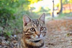 Autumn cat de autumn_soul