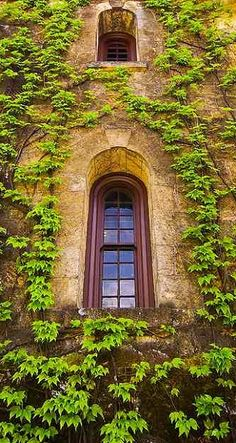 Ivy Windows.. Chateau Montelena building in Callistoga, California // by artchang on Flickr.