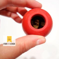 Los mejores trucos caseros para usar el Kong. #Kong #Adiestramiento