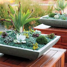 Plant a succulent square - Great Ideas from the Western Garden Book of Landscaping - Sunset