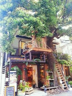 green plant-based design, wood 식물이나 목재를 이용한 인테리어 사진 모음입니다.