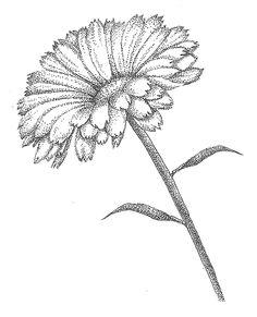 Calendula Canvas Print / Canvas Art by Christy Beckwith Dotted Drawings, Art Drawings Sketches, Pencil Drawings, Stippling Drawing, Dot Art Painting, Ink Illustrations, Pen Art, Art Sketchbook, Mandala Art
