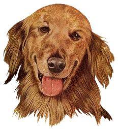 spreekbeurt hond