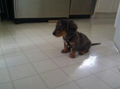 Doxie.