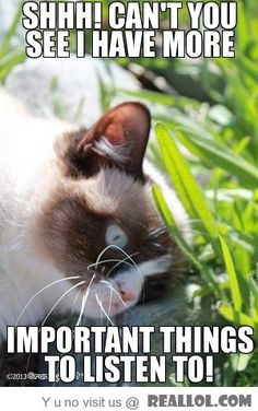 Grumpy cat funny, grumpy cat humor, sarcastic funny …For more funny quotes and hilarious images visit www. Grumpy Cat Quotes, Grumpy Cat Meme, Cat Jokes, Grumpy Kitty, Kitty Cats, Funny Cats, Funny Animals, Cute Animals, Animal Funnies
