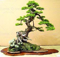 Mini-Potted Bonsai Tree in Planters