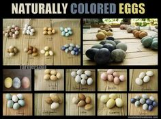 Naturally colored eggs