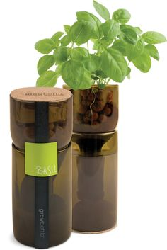 Grow Bottles are repurposed wine bottles used to grow basil, chives, mint, oregano, & parsley using hydroponics. Each Grow Bottle contains everything you need for growing, from seeds to clay pebbles to instructions on how to setup your hydroponic garden ~ by Shed Creations / Dwell