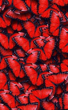 texture red butterfly hd wallpaper by sophiaLane Butterfly Facts, Butterfly Mobile, Red Butterfly, Butterfly Wallpaper, Butterfly Kisses, Tumblr Wallpaper, Wallpaper World, Mobile Wallpaper, Galaxy Wallpaper