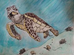 Sea turtle illustration by Sara Neves Cottoncandy's Family