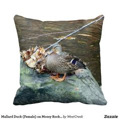 Mallard Duck (Female) on Mossy Rock Pillow