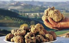 Istrian truffles