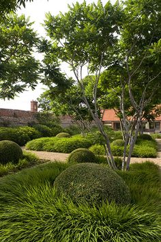 Tom Stuart-Smith garden design:  Love the round box balls underplanted with, possibly, crocosmia.  Just gorgeous.