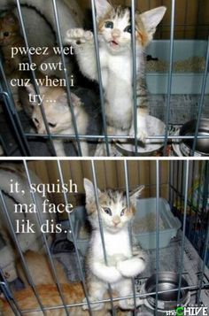 Please let me out, cause when I try I squish my face like this ! - Bing Images