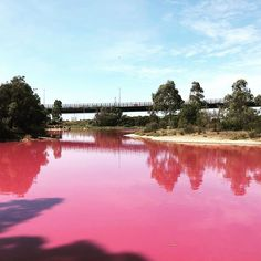 Tag a friend who loves pink for a trip to the west gate lake! . Beautiful west gate park! The salt lake in Westgate Park in Port Melbourne below the Westgate Bridge has turned bright pink due to a perfect mix of high temperatures sunlight and low rainfall. . Pink Lake, Bright Pink, Sunlight, Melbourne, Gate, Bridge, Around The Worlds, River, Outdoor