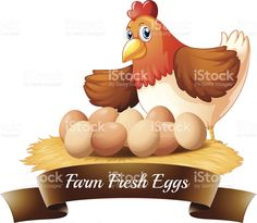 Fresh eggs from the farm royalty-free stock vector art
