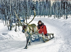 Reindeer Sled Ride in Finland: http://www.buckettripper.com/driving-a-reindeer-sled-at-the-arctic-circle-in-finland/reindeer-sled-ride/