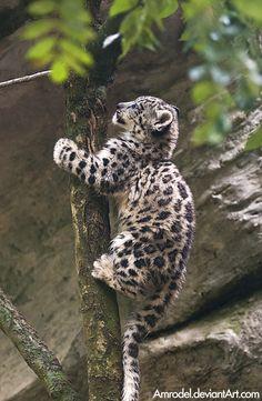 """The Tree-Climber!"" (Photo By: Amrodel.deviantart.com )"