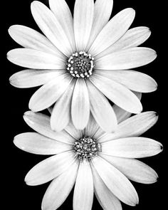 White Flowers, Beautiful Flowers, Spring Flowers, Flower Phone Wallpaper, Nature Wallpaper, White Image, All Poster, Landscape Photographers, White Photography