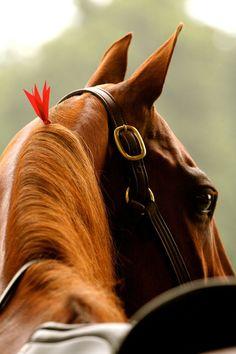 Equine horse pony equestrian caballo pferde equestrian stallion gelding mare foal.
