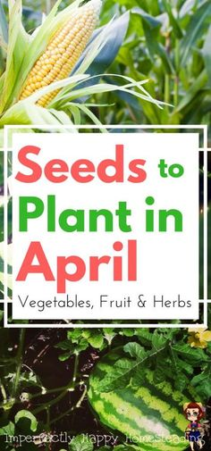 Seeds to Plant in April - Vegetables, Fruits & Herbs for Zones 3 -10  Gardening in Spring & Summer