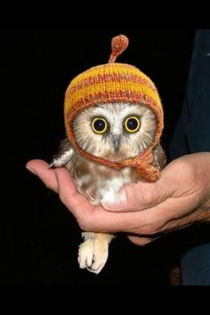 Owlet cuteness overload!!!! His feets!!!