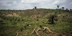 « On peut parvenir à une sécurité alimentaire en augmentant les rendements avec des pratiques respectueuses des écosystèmes et en intégrant les ressources forestières, plutôt qu'à travers l'expansion des zones agricoles aux dépens des forêts »...   http://www.lemonde.fr/planete/article/2016/07/20/nourrir-l-humanite-sans-detruire-de-nouvelles-forets_4972050_3244.html