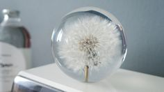 It's one thing to READ the weather and something entirely different to FEEL it. That's the idea behind Dandelion, named after the flower signal for springtime.