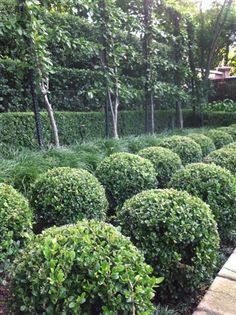 Classical Espalier with Buxus Balls