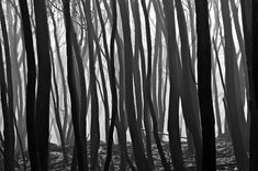 Black and White landscape photography...i see inspiration pattern ideas from this photo..