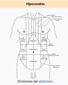 Np School, School Info, Human Body Anatomy, Muscle Anatomy, Medicine Student, Medical Anatomy, Med Student, Anatomy And Physiology, Anatomy Reference
