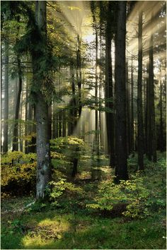 The Enchanted Forest: A Forest of Light & Shade by Ingrid Lamour Foto Nature, All Nature, Amazing Nature, Beautiful World, Beautiful Places, Beautiful Pictures, Beautiful Forest, Beautiful Boys, Landscape Photography