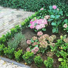 Project in the garden today, love the pink hydrangeas! Spot my dog Brum!  #homestylinginspiration #home #homedeco #homeinspo #homeinspiration #homestyling #homestylinginspo #homestylingideas #homestylingtips #homesweethome #homedecoration #homedecorating #homedecor #instadecor #inspiration #instahome #interior #instainterior #decor #interiordesign #gardenstyling #dog #norfolkterrier #hydrangea