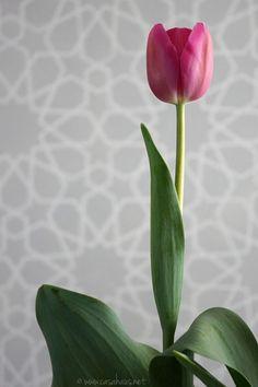 Tulipán Casa Haus